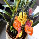 20101001blog-2010-10-01-8-20-24.JPG