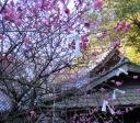 110222blog-2011-02-22-8-19-49.JPG
