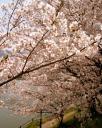 110411blog-2011-04-10-13-45-38.JPG